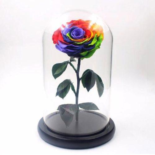 گل رز جاودان